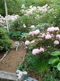 Rendez Vous aux Jardins 2018 -Visite  découverte du jardin de la Grenouillère