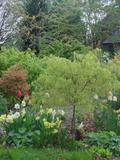 Rendez Vous aux Jardins 2018 -Visite découverte du Jardin des Pics Verts