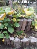 Rendez Vous aux Jardins 2018 -Visite découverte du jardin Labori Clignancourt