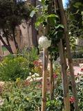 Rendez Vous aux Jardins 2018 -Visite découverte du jardin médiéval d'Aubune