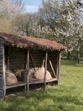 Rendez Vous aux Jardins 2018 -Visite découverte du jardin médiéval du château de la Guyonnière