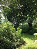 Rendez Vous aux Jardins 2018 -Visite Découverte du Jardin parfumé et de la Bulle à parfums