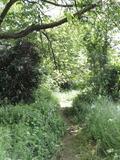 Rendez Vous aux Jardins 2018 -Visite découverte du jardin sauvage du collège de Vigny