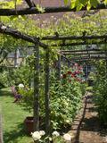 Rendez Vous aux Jardins 2018 -Visite découverte du jardin