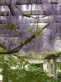 Rendez Vous aux Jardins 2018 -Visite découverte du Parc de Blossac, histoire et botanique
