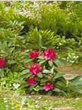 Rendez Vous aux Jardins 2018 -Visite découverte du Parc de Rosmapamon
