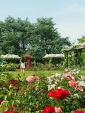 Rendez Vous aux Jardins 2018 -Visite découverte du parc floral de la Beaujoire