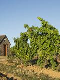 Journées du patrimoine 2016 -Visite-découverte du patrimoine viticole de Saint-Lambert-du-Lattay