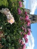 Rendez Vous aux Jardins 2018 -Visite découverte du Potager et du Parc des Etournelles