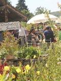 Rendez Vous aux Jardins 2018 -A la découverte des jardins en terrasses de Plombières-les-Bains
