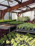 Rendez Vous aux Jardins 2018 -Visites guidées des serres municipales de la Ville de Bernay