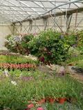 Rendez Vous aux Jardins 2018 -Visite libre des serres municipales