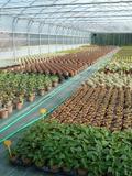 Rendez Vous aux Jardins 2018 -Visite du centre de production végétal de la communauté d'agglomération de Cergy Pontoise