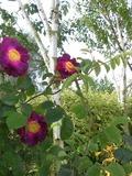 Rendez Vous aux Jardins 2018 -Visite du jardin A fleur décorces