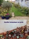 Rendez Vous aux Jardins 2018 -Visite commentée du jardin botanique en pots