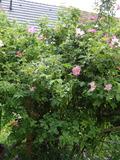 Rendez Vous aux Jardins 2018 -Visite du jardin d'émotions