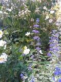 Rendez Vous aux Jardins 2018 -Visite du jardin des Mairupts