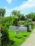 Rendez Vous aux Jardins 2018 -Visite libre du jardin des Têtards