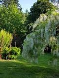 Rendez Vous aux Jardins 2018 -Visite libre du jardin du Goublin, jardin privé