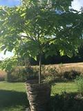 Rendez Vous aux Jardins 2018 -Visite du jardin du puits des granges