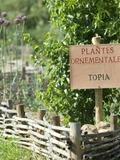 Rendez Vous aux Jardins 2018 -Visite du jardin gallo-romain