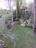 Rendez Vous aux Jardins 2018 -Visite commentée du jardin.