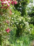 Rendez Vous aux Jardins 2018 -Visite du Jardin