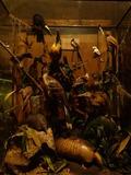 Journées du patrimoine 2016 -Visite du musée de la chasse