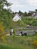 Rendez Vous aux Jardins 2018 -Visite du parc de Groussay accompagnée de poneys