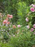 Rendez Vous aux Jardins 2018 -Visite du parc et des jardins de La Chaux