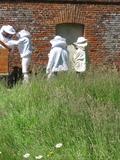 Rendez Vous aux Jardins 2018 -Visite guidée du rucher du château de Martainville