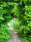 Rendez Vous aux Jardins 2018 -Visite et Découverte au Jardin sauvage