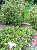 Rendez Vous aux Jardins 2018 -Visite et exposition au jardin de roses
