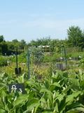 Rendez Vous aux Jardins 2018 -Visite gourmande des jardins du Village Musée du Der
