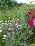 Rendez Vous aux Jardins 2018 -Visite guidée, agroécologie et permaculture au Jardin Mosaïque