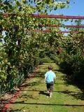 Rendez Vous aux Jardins 2018 -Visite guidée en présence du propriétaire-jardinier