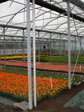 Rendez Vous aux Jardins 2018 -Visite commentée des serres du Monteil