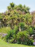 Rendez Vous aux Jardins 2018 -Visite guidée du jardin botanique de Vauville