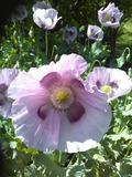 Rendez Vous aux Jardins 2018 -Visite guidée des Jardins de Fraîche-Comté