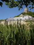 Rendez Vous aux Jardins 2018 -Visite guidée du Potager-fruitier : un jardin à la française aux multiples variétés