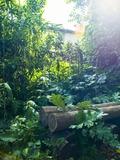 Rendez Vous aux Jardins 2018 -Visite historique et découverte du Jardin de la Reine de Montpellier