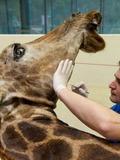 Journées du patrimoine 2016 -Visite « la girafe Twiga »