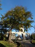 Rendez Vous aux Jardins 2018 -La ville d'Arles : d'arbres en arbres