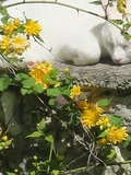 Rendez Vous aux Jardins 2018 -Visite libre d'un jardin dédié aux plantes sauvages comestibles.