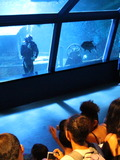 Journées du patrimoine 2016 -Venez découvrir l'aquarium