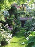 Rendez Vous aux Jardins 2018 -Visite libre de notre jardin consacré à la rose.