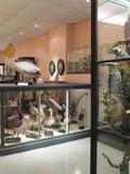 Journées du patrimoine 2016 -Visite libre des collections permanentes