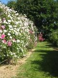 Rendez Vous aux Jardins 2018 -Roses et nénuphars au cœur de la vallée - Visite libre des jardins de Keroguic