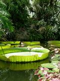 Rendez Vous aux Jardins 2018 -Visite libre des Serres de Collections tropicales