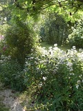 Rendez Vous aux Jardins 2018 -Visite libre du jardin de la Grande Haie
